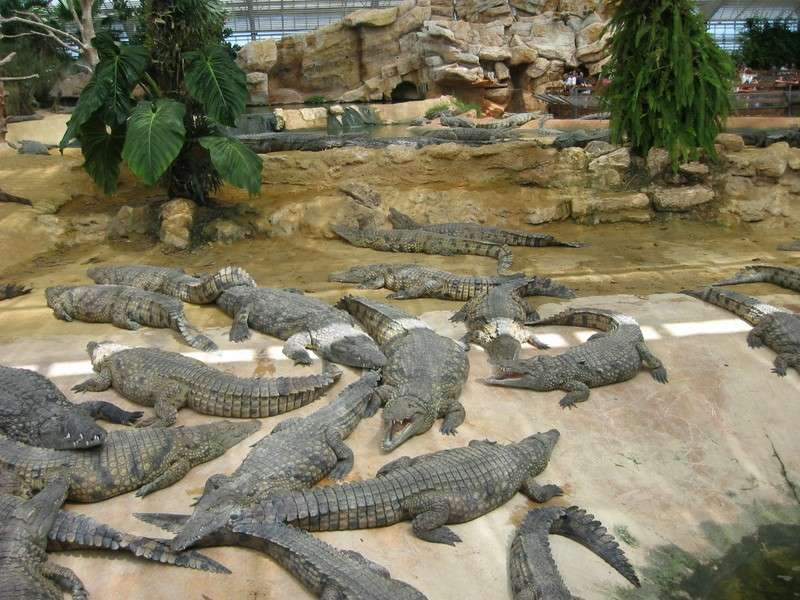 La Ferme aux crocodiles - photo 3