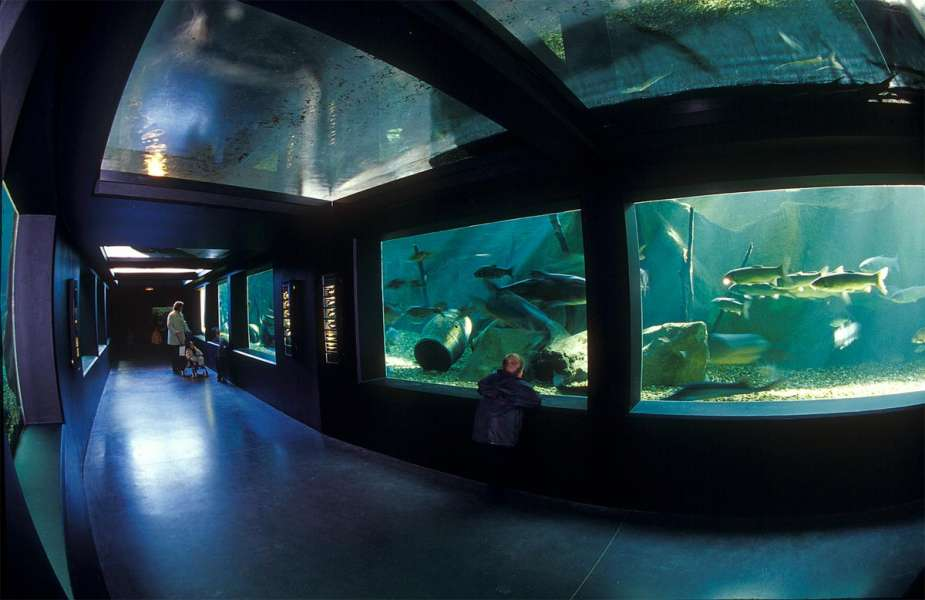 Grand Aquarium de Touraine - photo 1