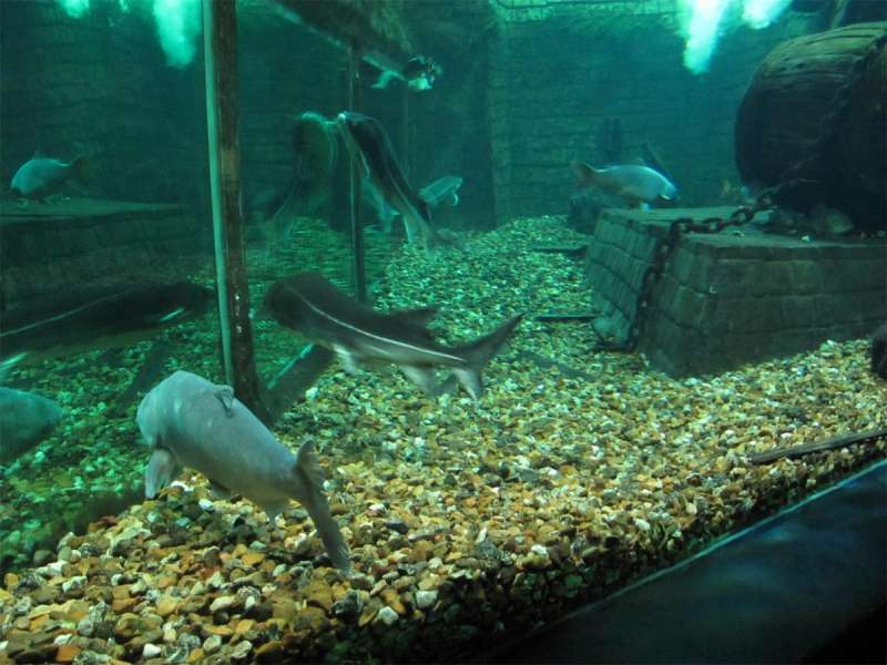 Grand Aquarium de Touraine - photo 4