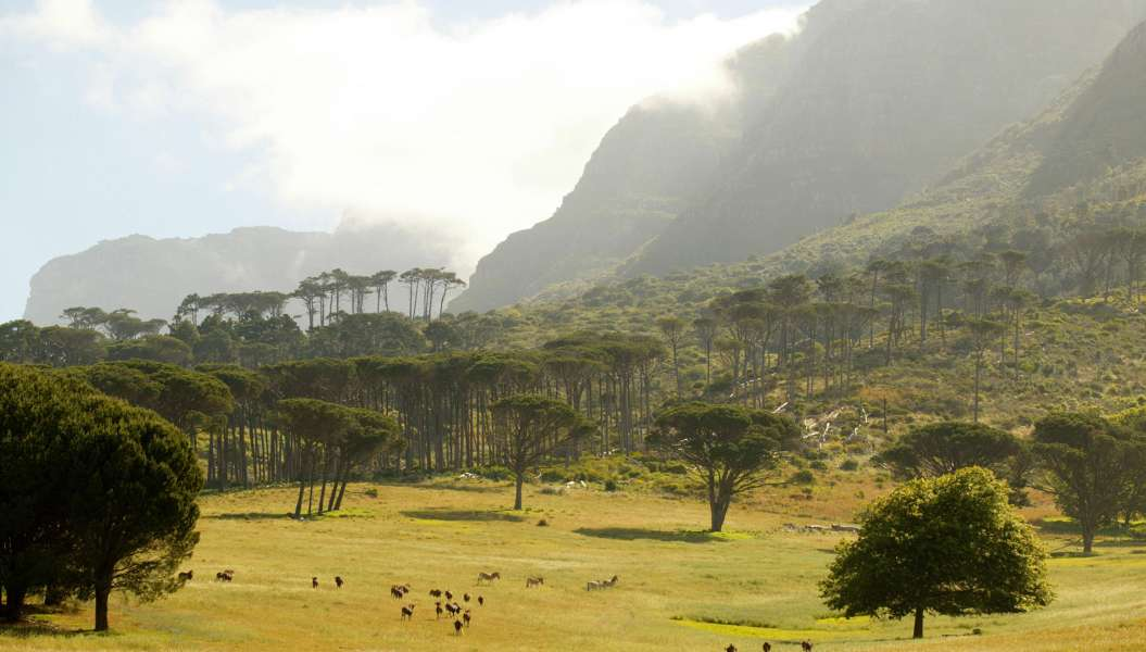 Afrique du Sud - photo 5