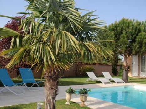 Le Clos des Pins - Le Pin Parasol - photo 1
